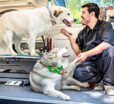 mobile pet grooming Miami beach