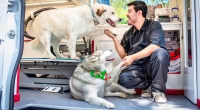 mobile pet grooming Miami beach
